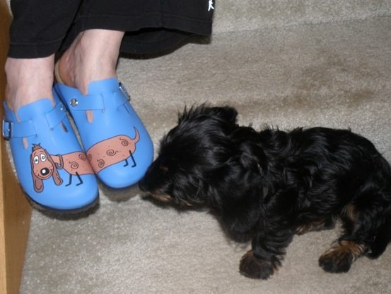 by barking dog shoes contributor beth b