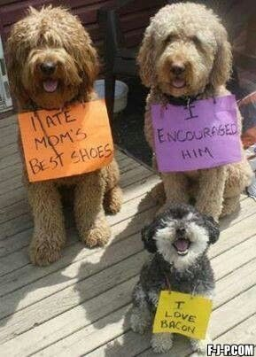 Funny-bacon-dog-shaming